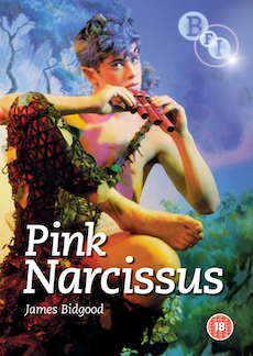Buy Pink Narcissus